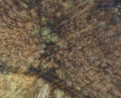 Wald aus der Luft 2