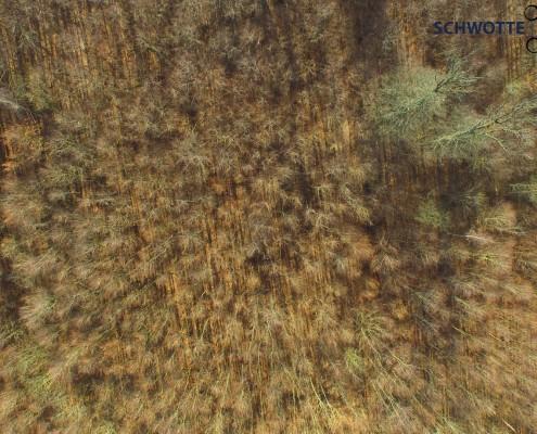 Wald aus der Luft